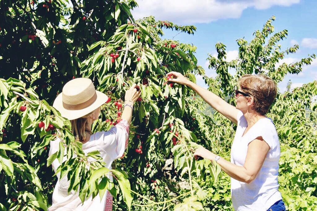 Enjoying #Jerte valley more and more before travelling to #Scotland Picking up #cherries. #Harvest time #Cerecera #Gastronomy @ValleCereza <br>http://pic.twitter.com/yiTovySUCK