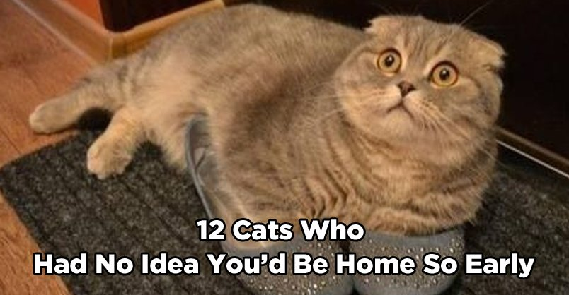 12 Cats Who Had No Idea You'd Be Home So Early CLICK to see >