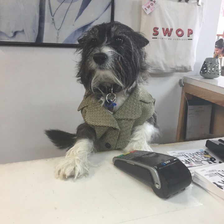 It's #TakeYourDogToWorkDay everyone. A ruff day in the office! https:/...