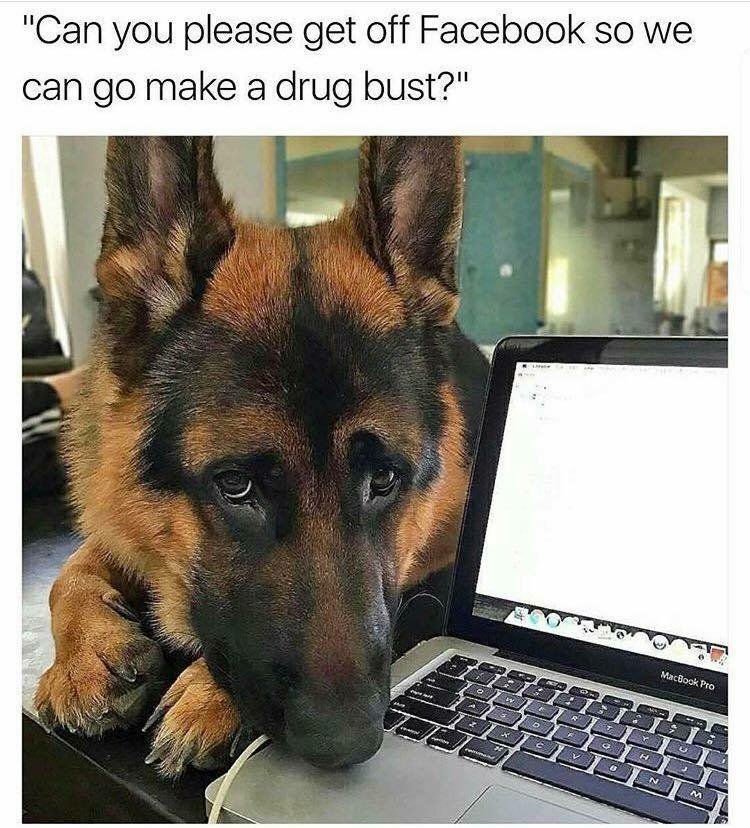 The Dog Squad - where every day is Bring Your Dog to Work Day #goals #...