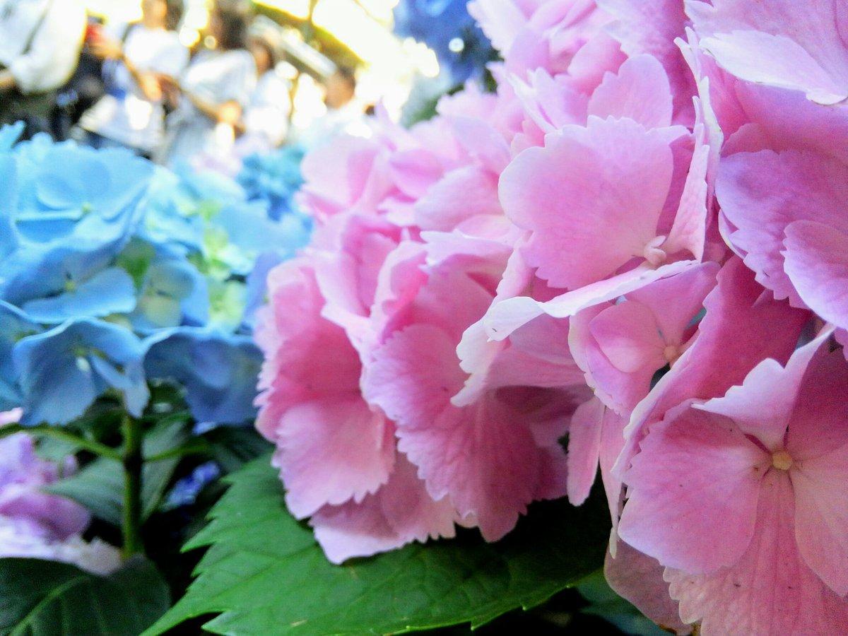 #私の_世界に一つだけの花 #世界に一つだけの花  #SMAP #fly_ SMAP<br>http://pic.twitter.com/E0DZKJk4DR