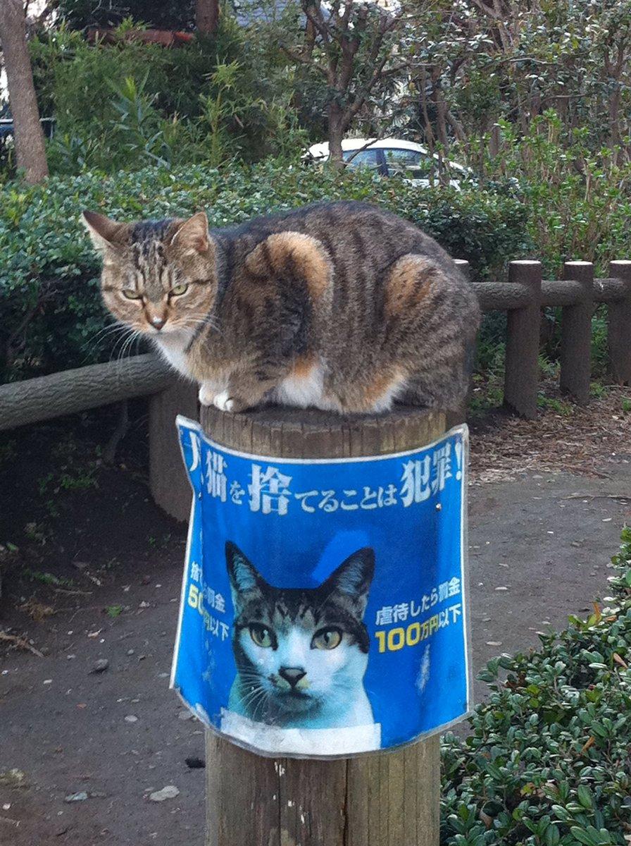 そういえば昔、横浜FC戦見に行った時に三ツ沢の駐車場で出くわして、あまりの衝撃に撮ったこいつ。ちゃんと読んどけってメンチ切られました。 pic.twitter.com/EFenNdUUkH
