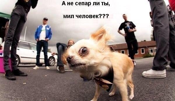 """Суд не запрещал переименование проспекта Ватутина"", - Вятрович - Цензор.НЕТ 6239"