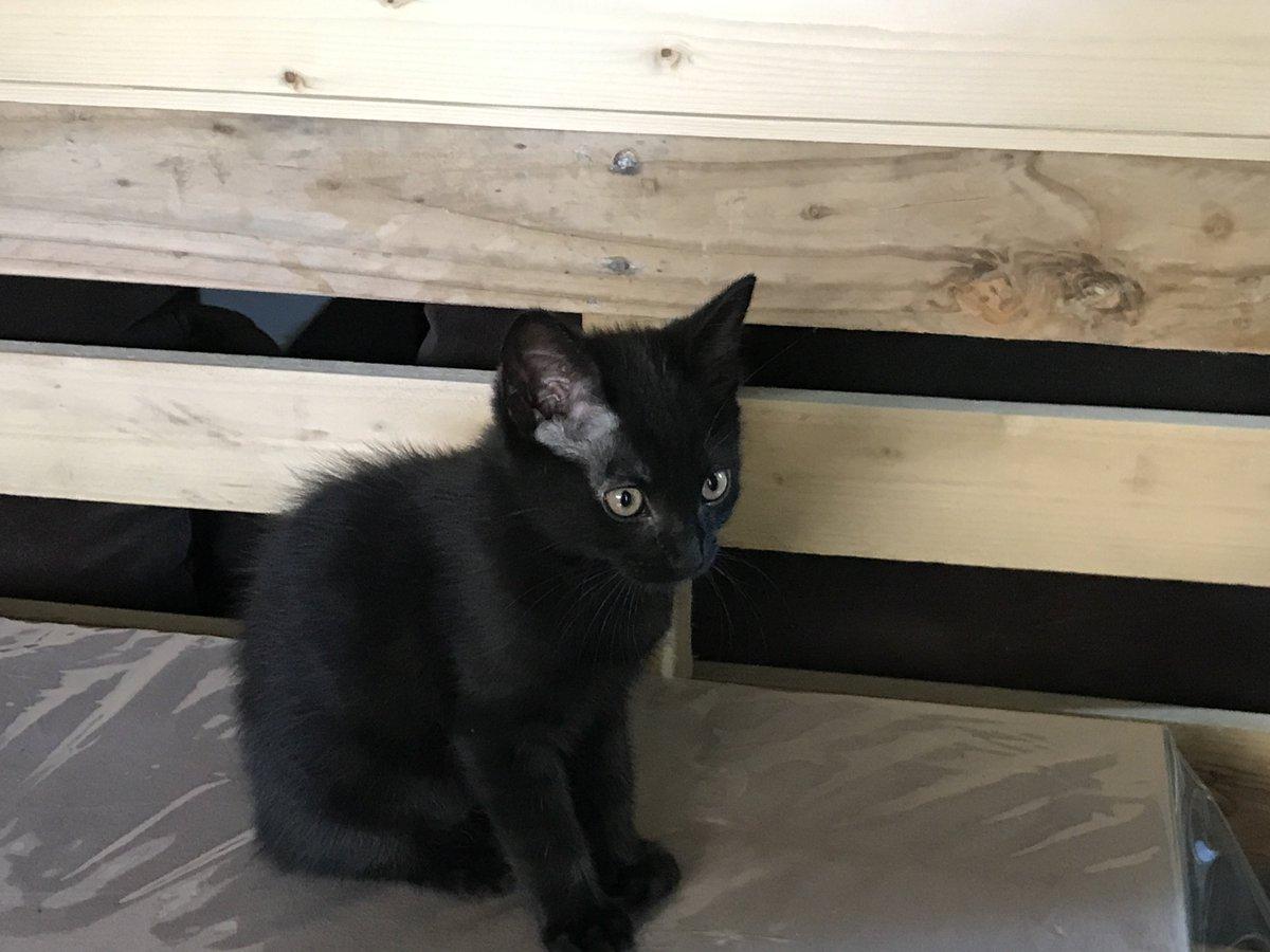 Est ce que j'ai un follower à Lyon ou dans les environs qui cherche un chaton ? J'en ai un tout mignon à donner. https://t.co/uiIstwKv2K