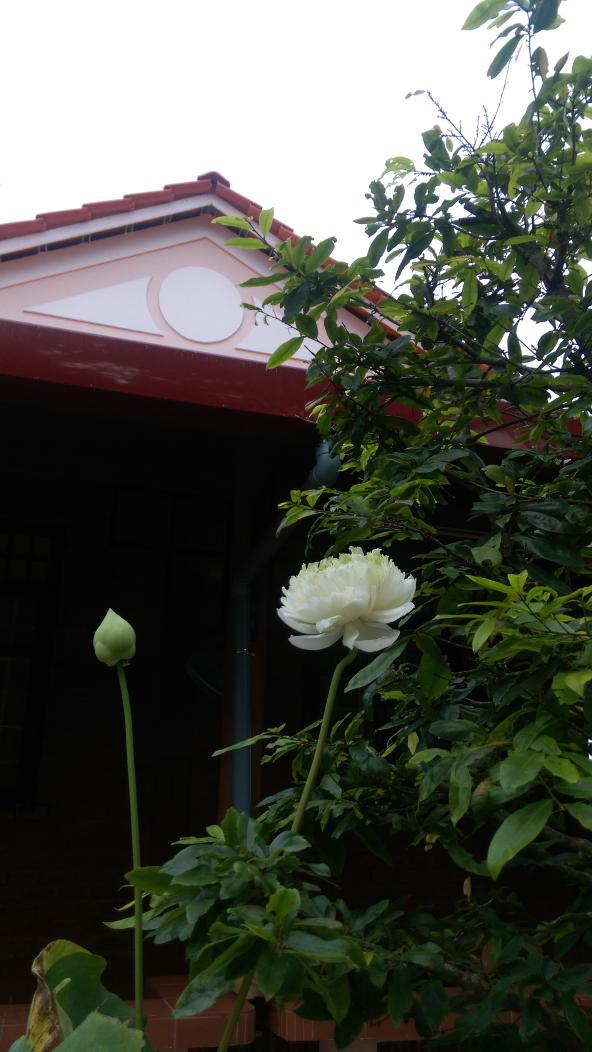 Utthuyhomestay On Twitter Flowers Good Morning At Utthuyhomestay Vinhlong Vietnam