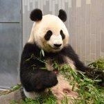 お披露目が楽しみ!上野動物園のシンシンが無事出産に成功!