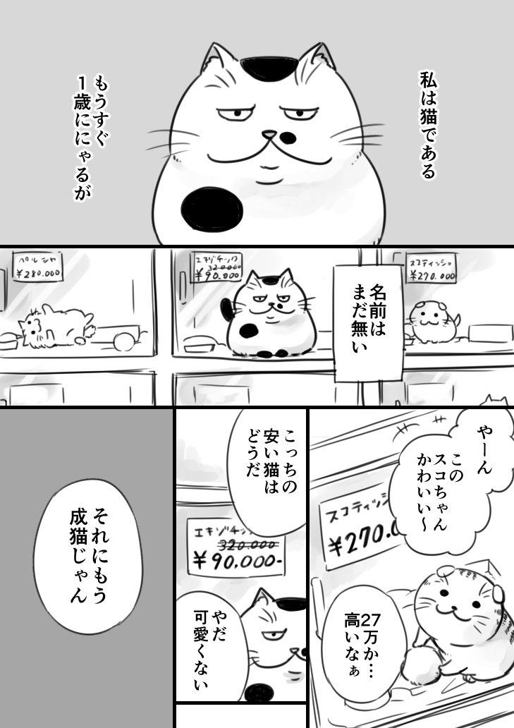 【猫漫画】おじさまと猫