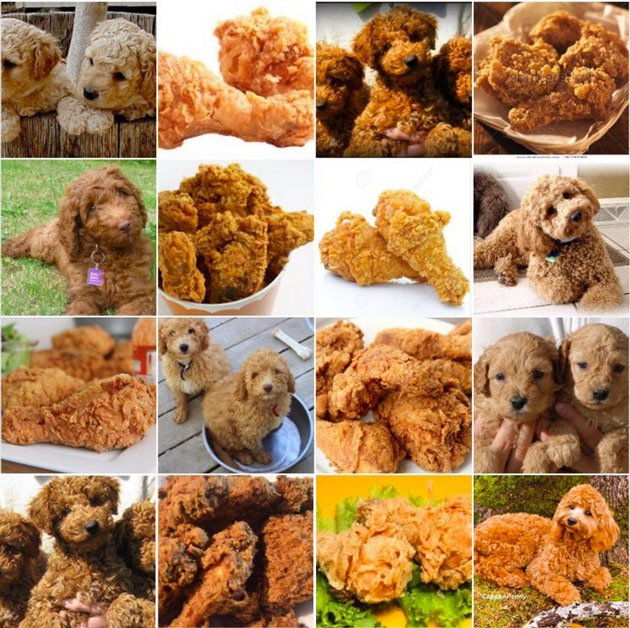 Artificial intelligence struggles to tell difference between fried chicken and Labradoodles.  I CAN'T GET ENOUGH OF THESE AI PROBLEMS. https://t.co/ntNVezropW