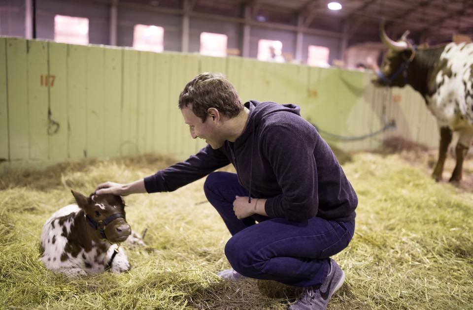Sanghi Gaurakshak Mark Zuckerbergs feeding Calf at Jed Gants farm in Wisconsin. Time for Libtards to deactivate Facebook.