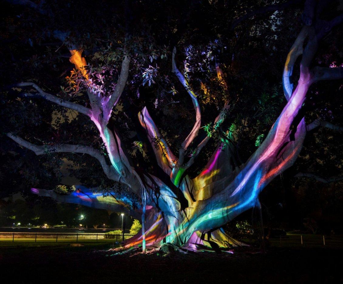 be inspired by the captivating light sound animation of the electric forest in rbgsydney created by tafensw students - Captivating Light Installation Artists