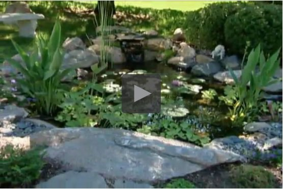 How to Put a Fish Pond in Your Backyard