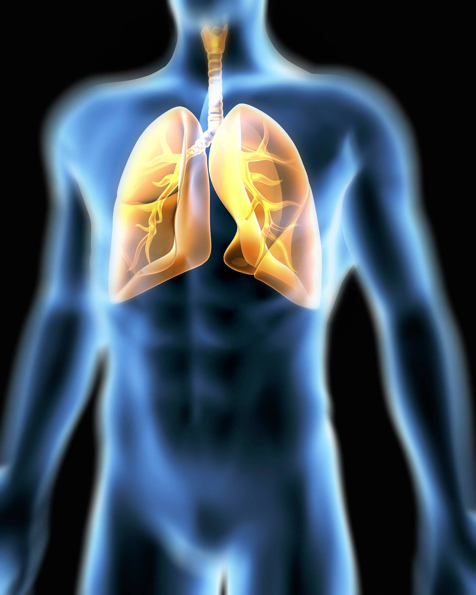 Bayer Ag Bayer Science Fact The Lungs Are The Only