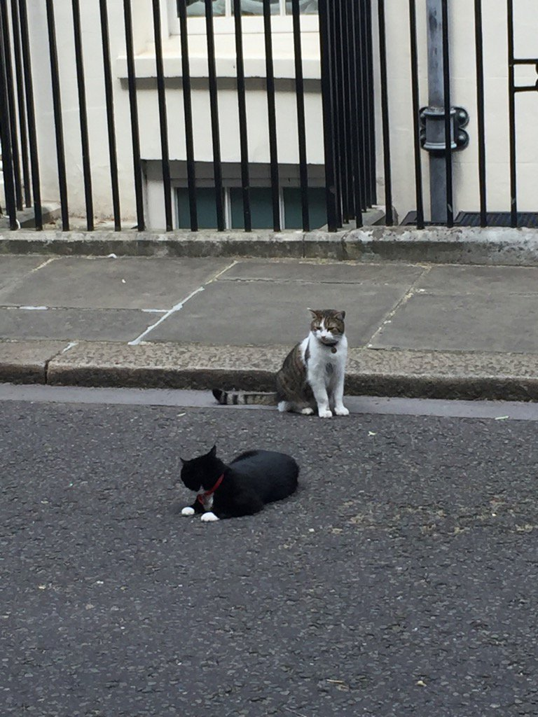 Hard going as Larry @Number10cat & Palmerston @DiploMog try to reach a confidence and supply deal https://t.co/ZO7izxpIjk