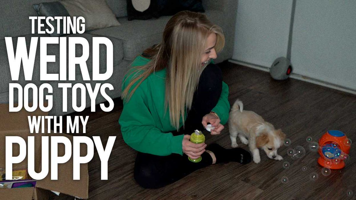 Have you seen this past weekends new video yet?! TESTING WEIRD DOG TOYS WITH MY PUPPY >>> youtube.com/watch?v=27sELU…