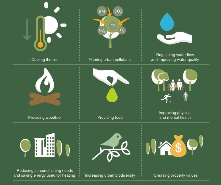 9 reasons to respect and plant trees, via @FAOForestry. Forest protection is #ClimateAction <br>http://pic.twitter.com/fSb8iyYUPY