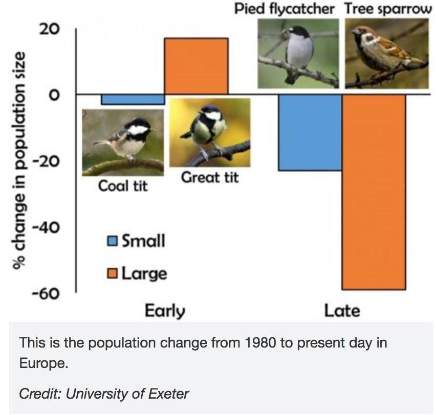 Late-nesting birds &amp; bees face habitat threat  http:// ow.ly/srEC30cysbd  &nbsp;   #ornithology <br>http://pic.twitter.com/78ZLIUufub