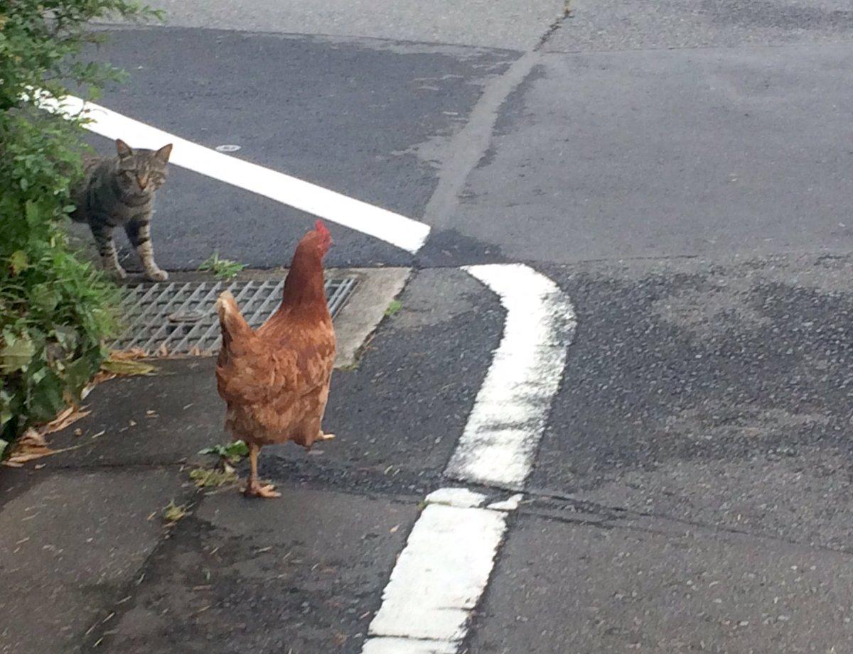 朝歩いてるといろいろ出くわす