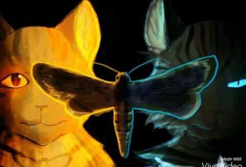 Коты воители огнезвезд фото - 6ece