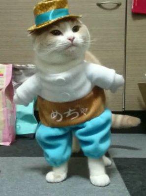 めちゃコミック 猫