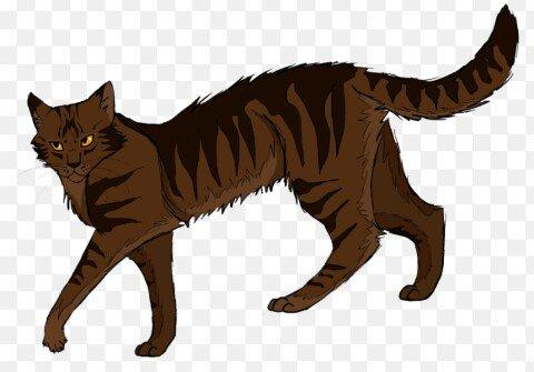 Коты воители огнезвезд фото - 8eda