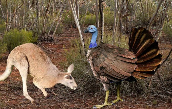 Scientists think the ancient flying kangaroo-sized turkeys roosted in trees https://t.co/qjujuFkitN https://t.co/1fEp3j0bX9