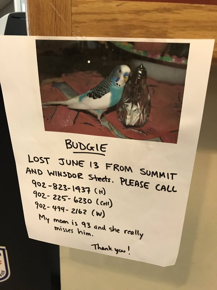 OMG this is the sadest thing ever. People of Halifax please RT! #lostbudgie #halifax https://t.co/BgZUSgywCg