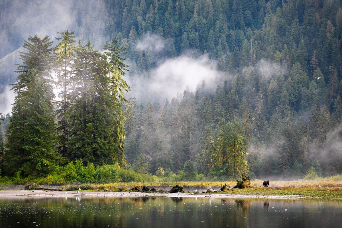 New #OA research in @ESAEcosphere reveals range of BC&#39;s &quot;fish-iest&quot; bears @Raincoast @HakaiInstitute @UVicGeog    http:// bit.ly/2t6K9T5  &nbsp;  <br>http://pic.twitter.com/hHg27EFSdu