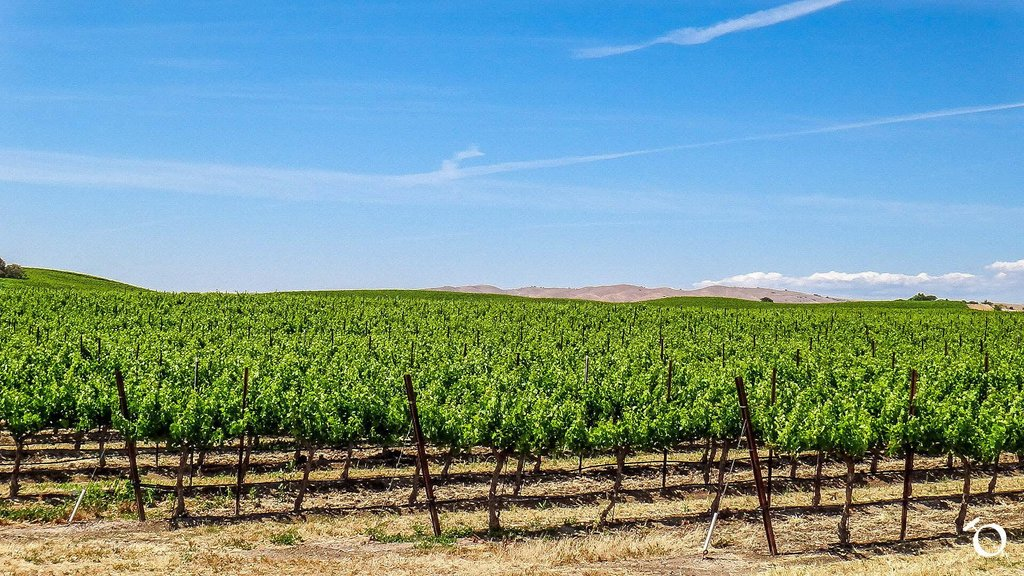 #PasoRobles #EstrellaDistrict only gets 12.5-15.5 in of #rain per #year but is #supplemented by #fog &amp; #ocean #air  http:// bit.ly/2rjpD13  &nbsp;  <br>http://pic.twitter.com/YmmMk2ksrq