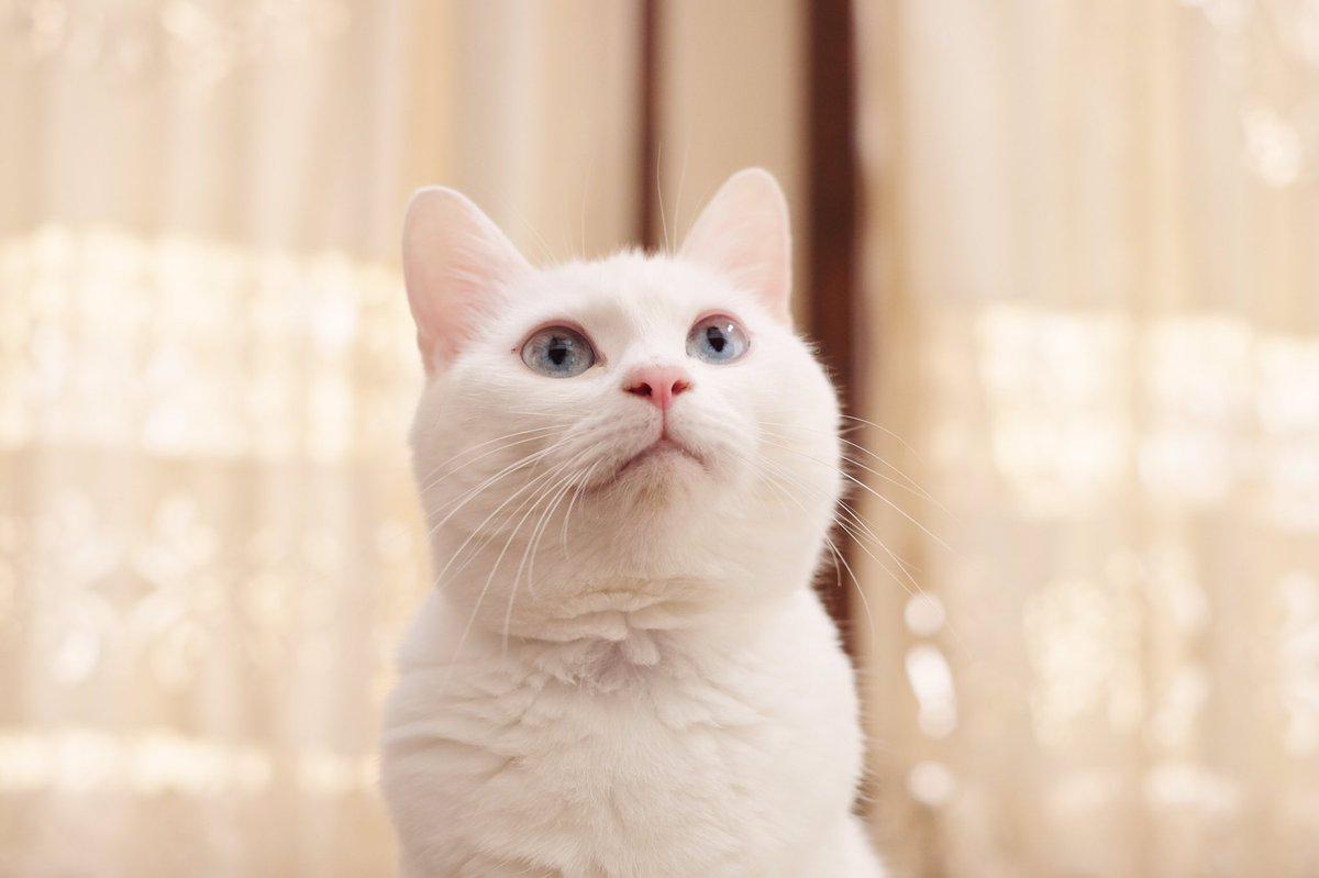 外での生活は過酷ニャ。決して穏やかではないニャ。 他の猫とケンカしてケガをしたりエイズや白血病に感染してしまったり...  どんなに辛くても猫は自分で病院にも行け ...