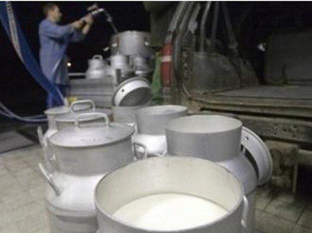 Allerta Alimentare: Piombo nel latte di pecora italiano per produrre formaggio | Salute News
