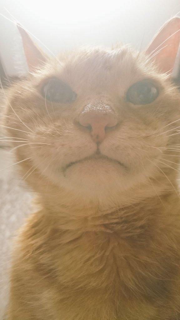 猫を胸の上に乗せる仕事をずっとしてる。 https://t.co/Kyp2IJEsvy