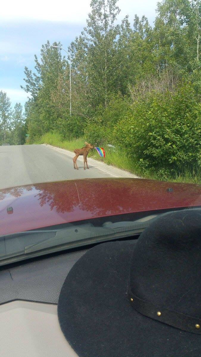 As a Newfoundlander, I never thought I'd say this:  'God bless this moose.' https://t.co/yVDAZ32peN