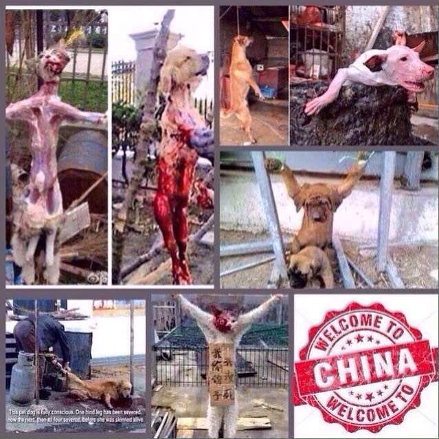 &quot;THIS PRODUCT&quot; was someone&#39;s FAMILY/BEST FRIEND before he was STOLEN from his loving home to be TORTURED,KILLED &amp; EATEN! #CARREFOUR #CHINA <br>http://pic.twitter.com/QuRyLOQouu