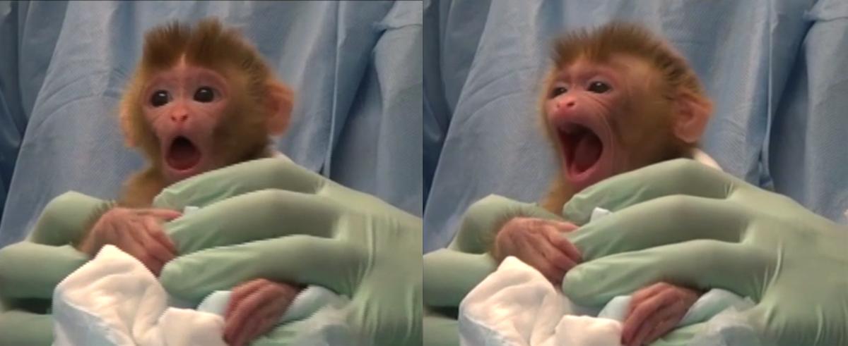 Testing the arousal hypothesis of neonatal imitation in infant rhesus macaques w/#yawns #OA @PLOSONE @AnnikaPaukner  http:// journals.plos.org/plosone/articl e?id=10.1371/journal.pone.0178864 &nbsp; … <br>http://pic.twitter.com/Yxa0epKWOX