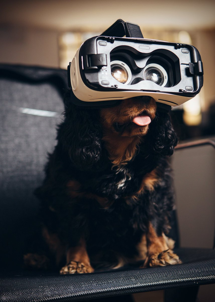 #bringyourdogtoworkday - A recent client enjoys the finished product-taken by @pet_pride for @alldogsmatter&amp;@animalasia #officedog #VR #A-VR <br>http://pic.twitter.com/CLNvVNKcrN