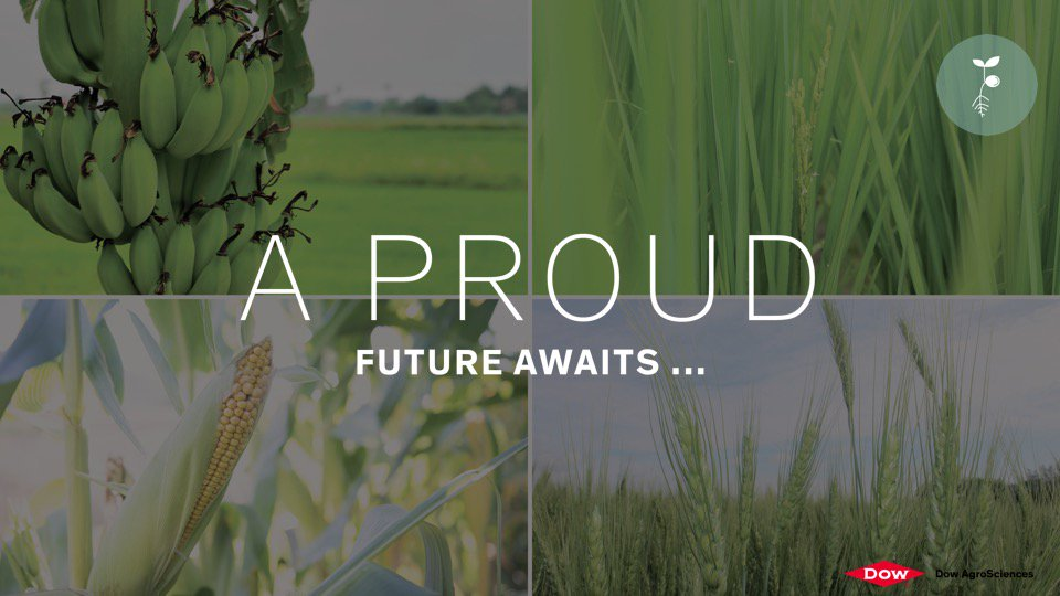 Advancements in #biotechnology could see the future introduction of golden rice, drought-tolerant maize and gluten-free wheat. @DowAgro<br>http://pic.twitter.com/DkDdW5aLK7