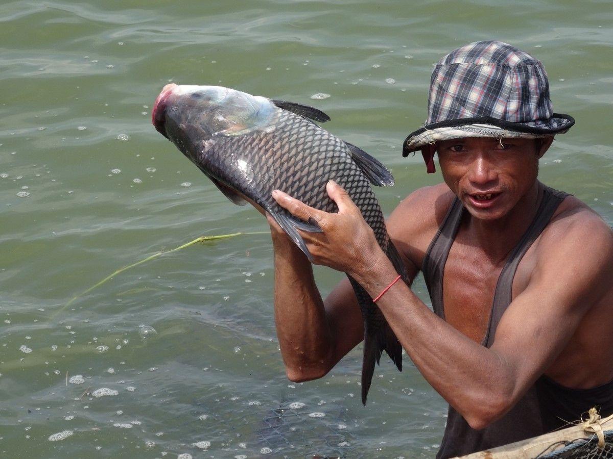 Feeding on farmed fish  http:// on.cgiar.org/2sn31jP  &nbsp;   @WorldFishCenter #Fisheries #Myanmar <br>http://pic.twitter.com/vMrhXTwKQ6