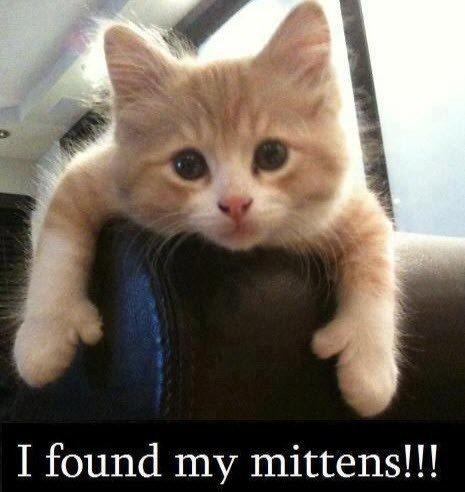 #Kitten thumbs. Super cute.