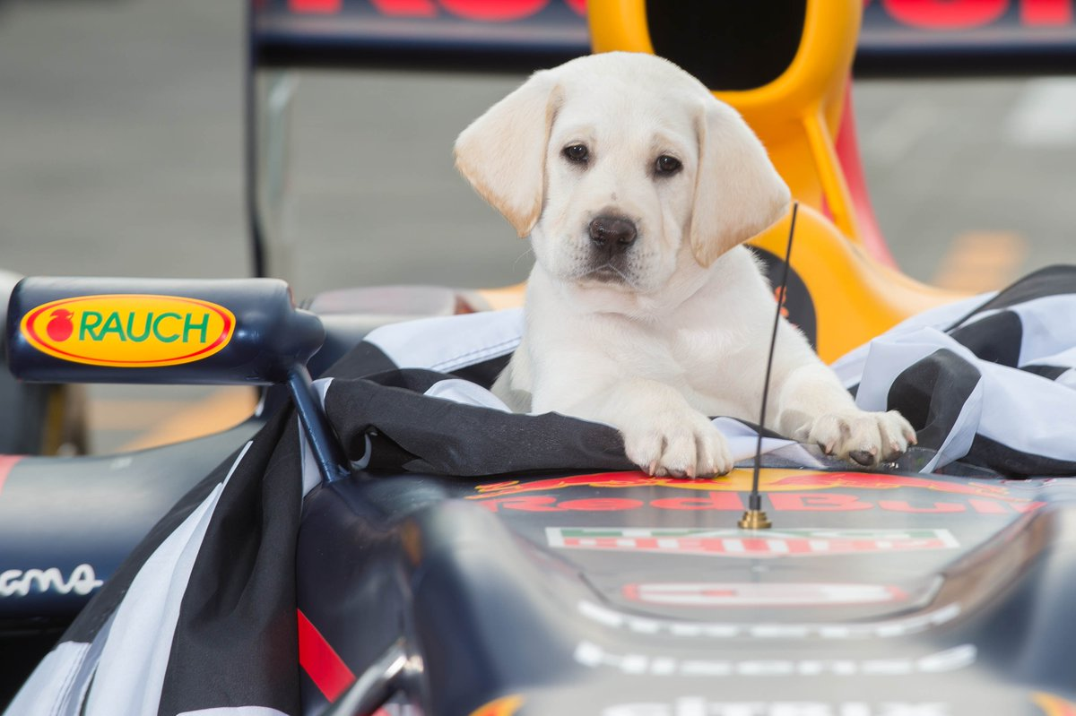 When it's #TakeYourDogToWorkDay but @F1 is life #WhyNotBoth 🐶🐶 #AusGP...