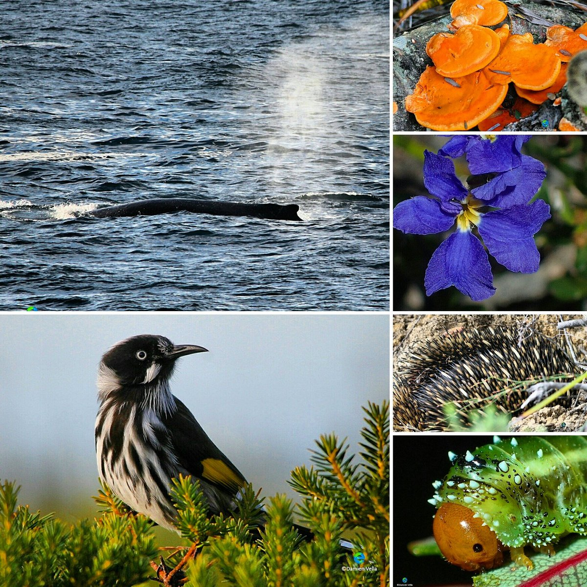 #Conserve#natural areas and you may be rewarded. Definitely enjoying the start to my weekend #wildlife#conservation #animals #fungi #plants <br>http://pic.twitter.com/3Fhzy7LmjJ