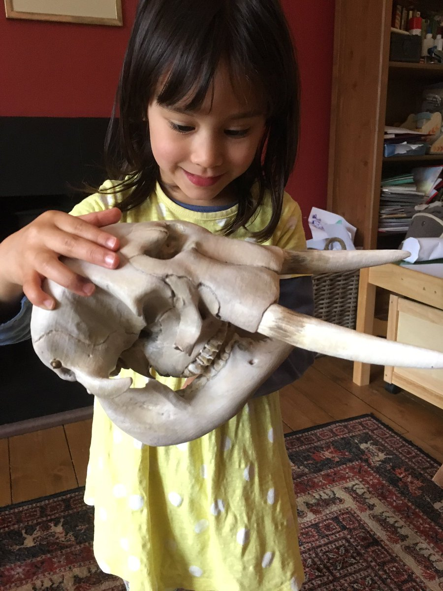 My daughter testing out the #3dprinted elephant skull I worked on #publicengagement #digitalheritage @UoD_Museums @djcadMake<br>http://pic.twitter.com/Pqz8YxB8c9