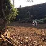 あれ?ふわふわのサッカーボール?実はサッカーボールじゃなくて猫だった