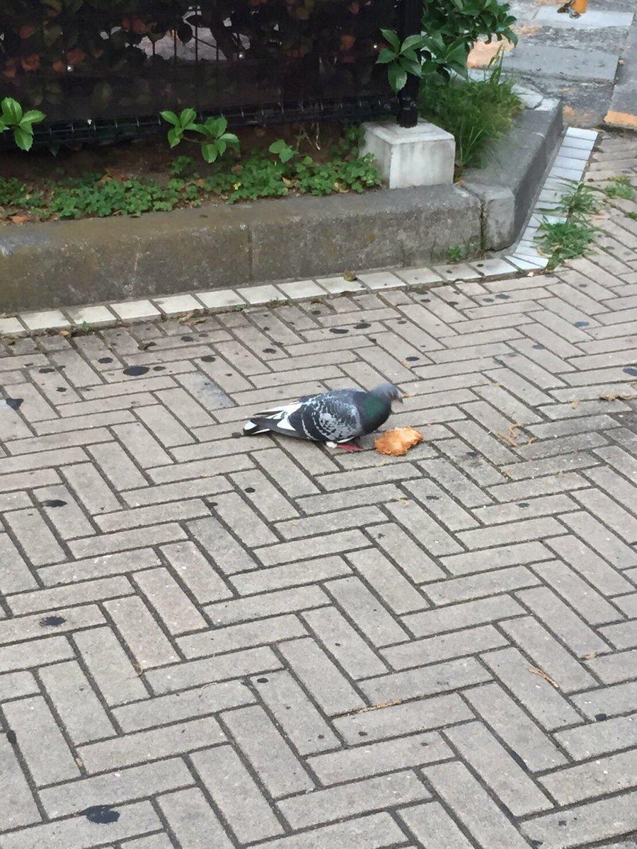 鳩がファミチキ食ってるのえぐすぎる…
