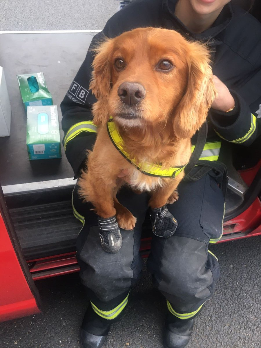 We've used specialist search dogs at #GrenfellTower. They're lighter than humans and can cover a large area quickly https://t.co/WVA0PBEKti