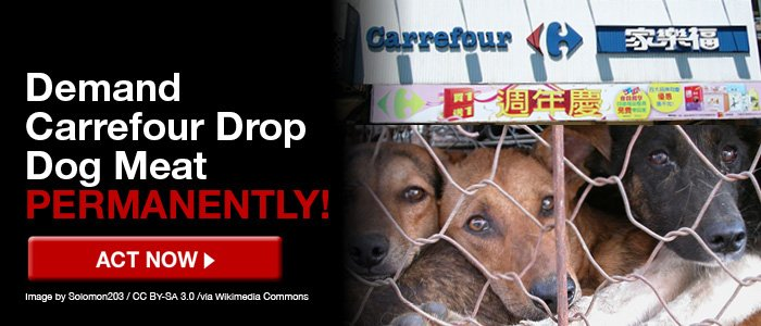 Tell #Carrefour to drop dog meat PERMANENTLY  http:// bit.ly/CarrefourDogMe at &nbsp; …  … #EndTheDogMeatTrade <br>http://pic.twitter.com/aogDfemE47 Pls