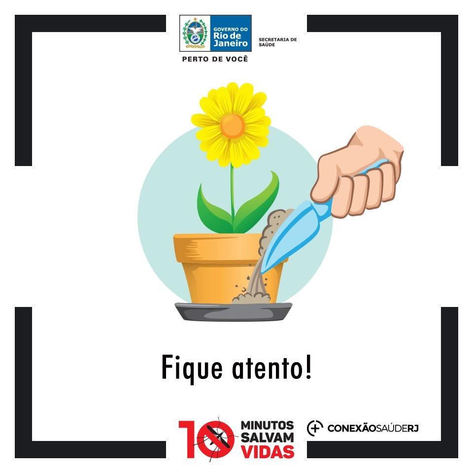 Pratos de vasos de planta podem acumular água e, com isso, se tornar um foco do mosquito. https://t.co/lTFLkWbhrS