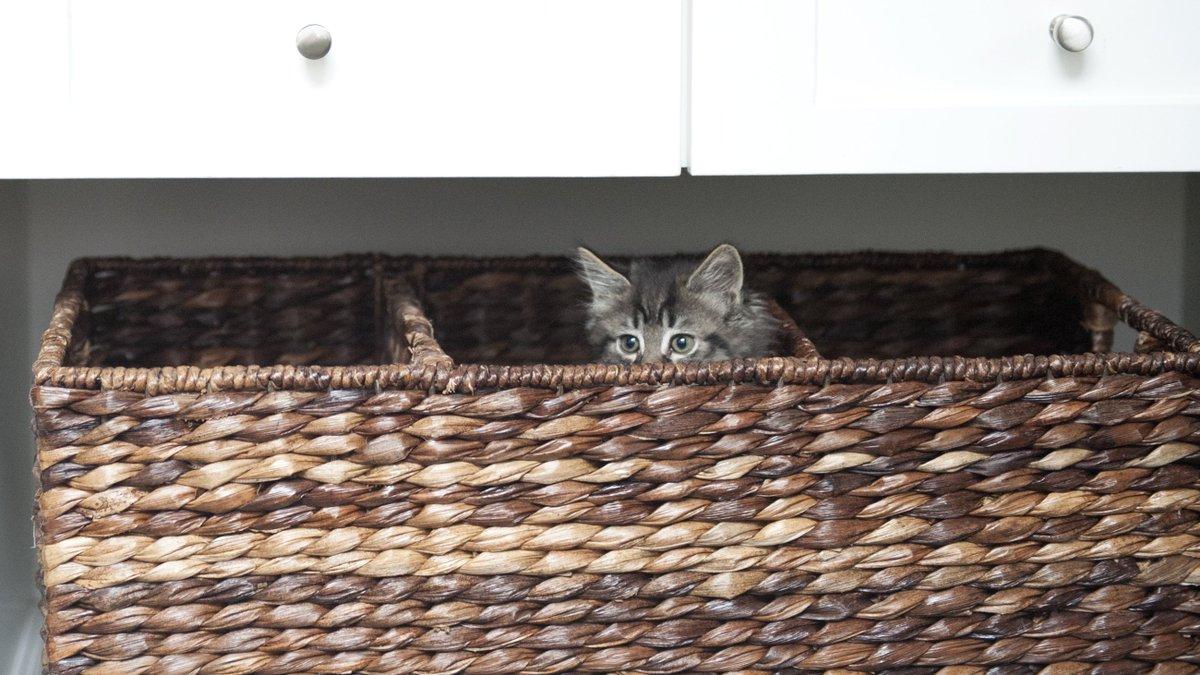 #WhatWomenWantIn4Words kitten in a basket https://t.co/b3M2Z8XGt9