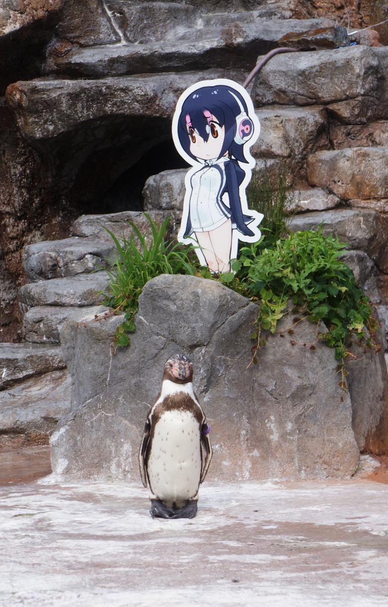 フルルとグレープ君、この哀愁漂うなんとも言えない空気感、映画のワンシーンみたい #東武動物公園 #けものフレンズ