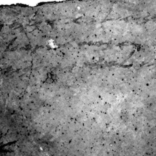 Arqueólogos descobrem mensagem secreta em cerâmica antiga https://t.co/WMWLfk7ZaZ