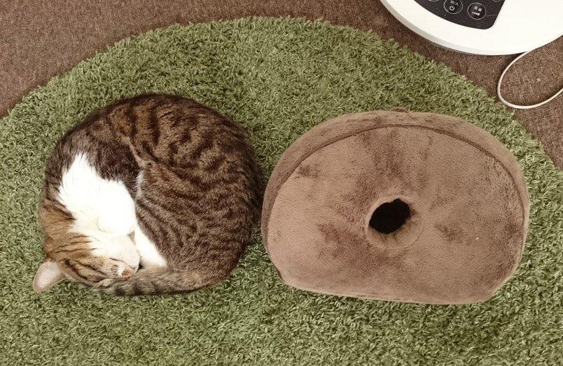 これは猫分身ッ!頭を乗せてみるまでどっちが猫かわからないぜ! https://t.co/elFMt1oihV
